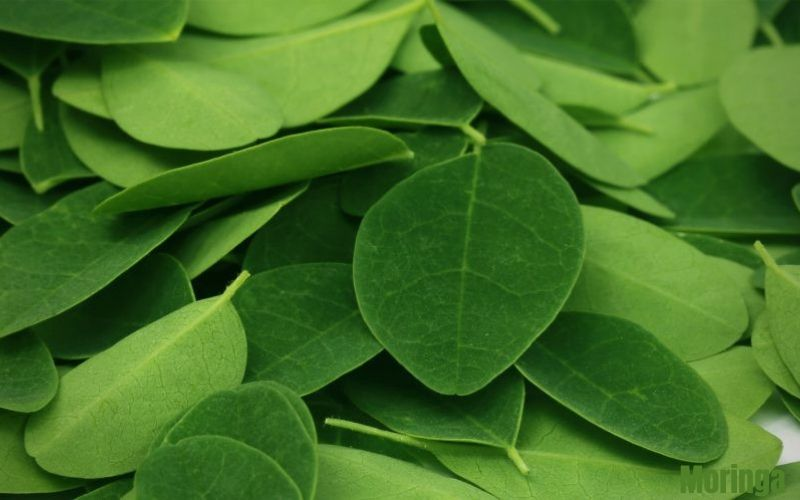 Moringa sous toutes ses formes - acheter du moringa - Luxembourg