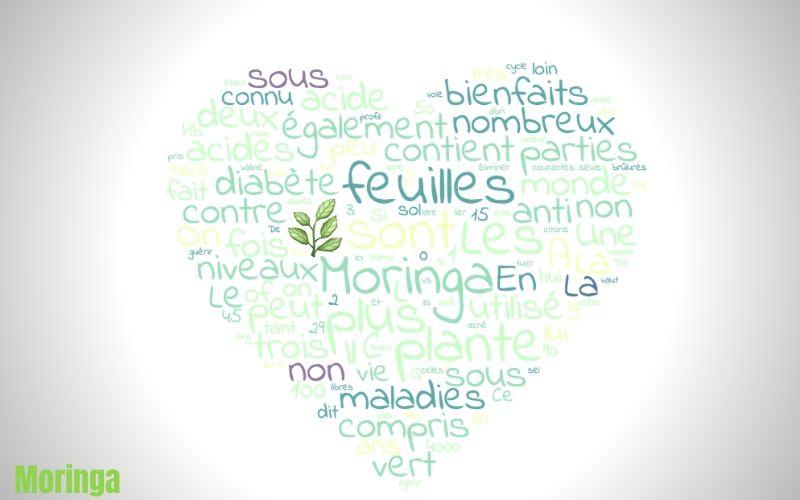 feuilles de Moringa bienfait sur votre corps - Moringa conseil Luxembourg