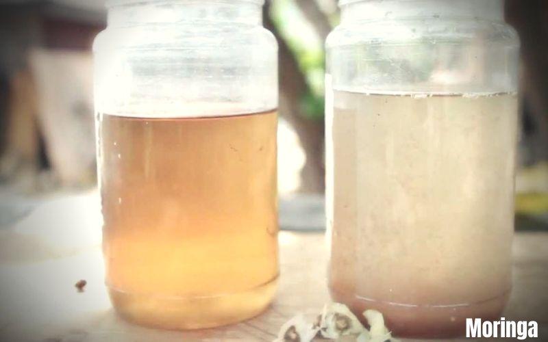 Procédure de purification d'eau grâce aux graines de Moringa - Luxembourg