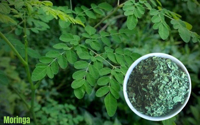 L'arginine - Le Moringa Luxembourg, feuilles séchées de moringa -  conseil Luxembourg